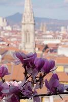 kersenbloesem sakura bloem in de lente foto