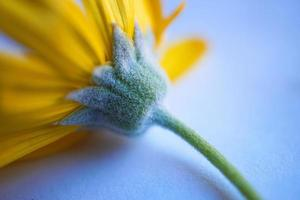mooie gele bloem in de lente foto
