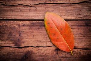 rood Herfstblad op hout foto