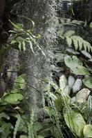 groene planten met mos