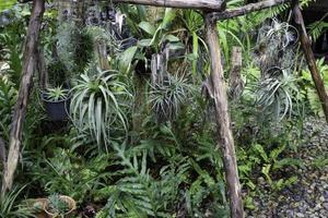 hangende planten in de tuin