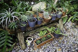 potplanten in de tuin
