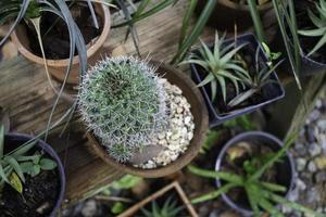 ingemaakte vetplanten in de tuin