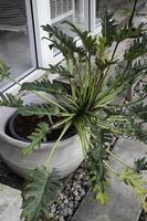 grote plant in pot in de tuin