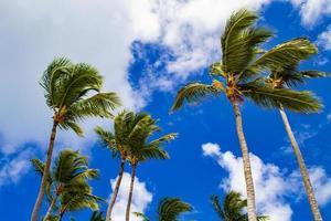 sterke wind zwaait met palmbomen