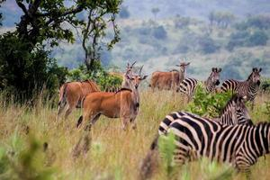 dieren in het wild in rwanda foto