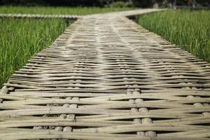 eenvoudige loopbrug in de zomer rijstveld