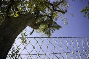 luifelbrug met bomen en blauwe hemel