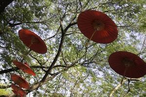 handgeschept papieren paraplu's die in een boom hangen