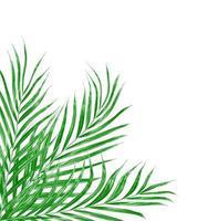 groene bladeren van een palmboom geïsoleerd op een witte achtergrond foto