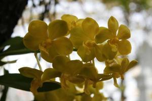close-up van orchideebloemen
