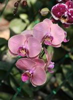 close up van een paarse orchideebloem foto