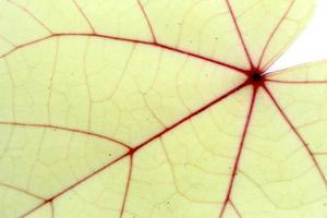 close-up van bladeren textuur achtergrond