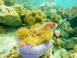 vissen dichtbij koraalrif