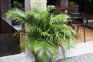 plant buiten in de buurt van een coffeeshop foto