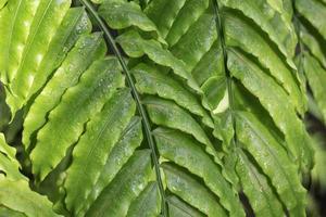 dauw op groene bladeren