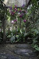 orchideeën in de tuin
