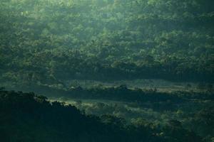 groen tropisch woud