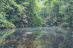 tropisch regenwoud in thailand foto