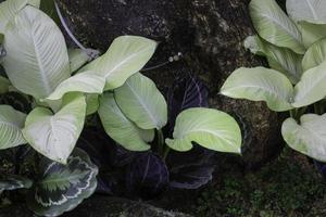 planten in de tuin foto