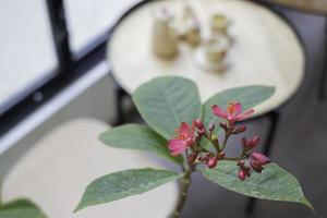 rode bloemen op een plant foto