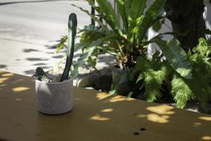 cactus in een plantenpot foto