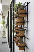 muur van planten foto