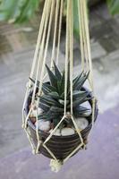 cactus die in macrame hangt foto