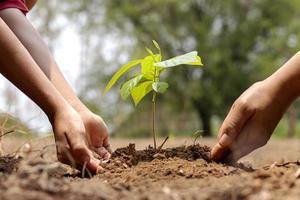 de handen van een kleine jongen helpen volwassenen kleine bomen in de tuin te laten groeien foto