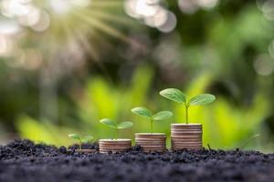 munten en planten die op een stapel munten groeien foto