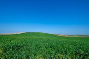 groen grasveld met blauwe hemel foto