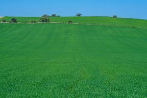 met gras begroeide groene veld foto