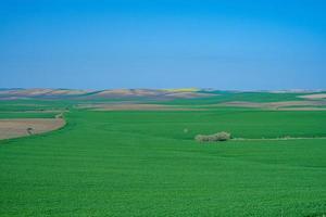 met gras begroeide groene veld met heuvels foto