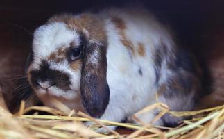 close-up van een konijn