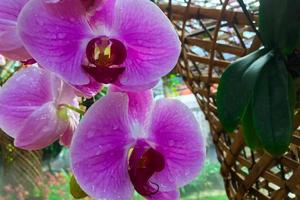 close-up van paarse orchideebloemen foto