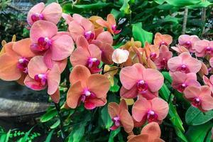 oranje orchideebloemen foto