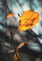 geel blad tegen de hemel foto