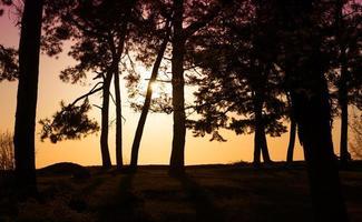 landschap met silhouetten van bomen met laagstaande zon foto