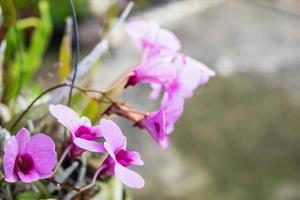 prachtige paarse orchideebloemen foto