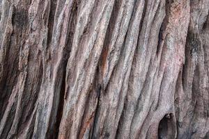 ruwe houtstructuur foto
