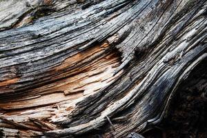 detail van grijs oud verweerd hout foto