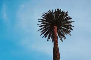 palmbomen en blauwe lucht in een tropisch klimaat foto