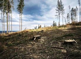 landschap van een gekapt bos foto