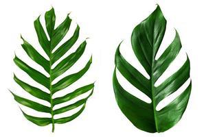 plat lag bovenaanzicht van groene palmbladeren foto