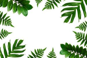 tropische palm bladeren frame op een witte achtergrond foto
