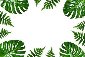tropische palm bladeren frame op een witte achtergrond