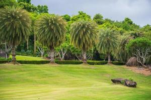 groen gras in de tuin van een golfbaan foto