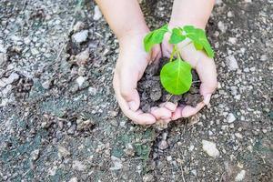 handen met een jonge boom foto