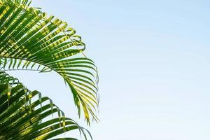 kokosnoot bladeren en hemelachtergrond foto