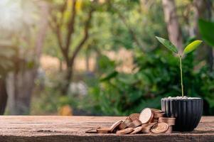 stapels munten naast een potplant op een houten tafel foto